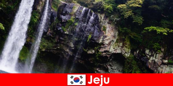 Jeju na Coreia do Sul, a ilha vulcânica subtropical com florestas deslumbrantes para os estrangeiros