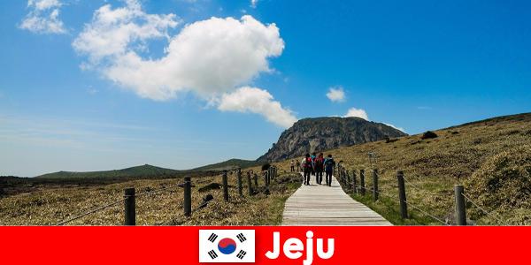 Turistas caminham pela fantástica paisagem natural em Jeju, Coreia do Sul