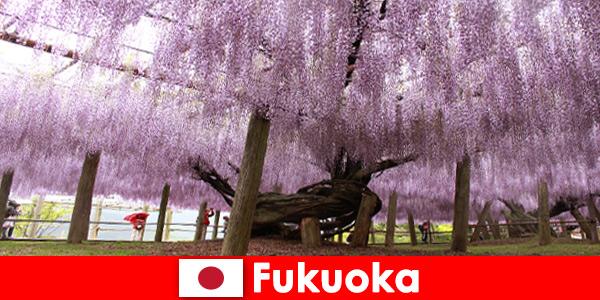 Viagens naturais para estranhos na natureza intocada de Fukuoka, Japão