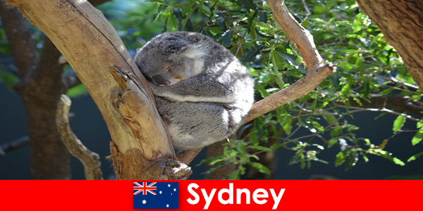 Destino Sydney, Austrália em um zoológico exótico com uma experiência noturna