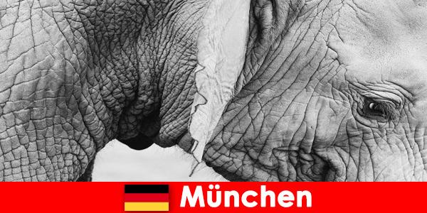 Viagem especial para visitantes do zoológico mais original da Alemanha, Munique